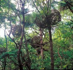 Contemporary Basketry: In the Trees by Breathing, Wolfgang Thomas Wohlfahrt