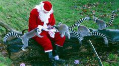 santa claus at the zoo