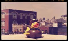 Pilot Duck on a roof