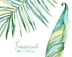 Tropical watercolor leaves. Handpainted clipart от OctopusArtis