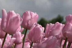 Als de zon meer gaat schijnen en de voorjaarsbloemen bloeien ga je uit je bol! Zing je mee?