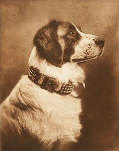 dog photo, 1895, by Emilie Clarkson