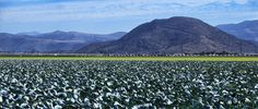 18 Cabbage mountains panorama.jpg (2000×849)