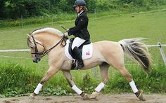fjord in dressage