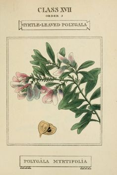 2 - Elements of the science of botany, - Biodiversity Heritage Library