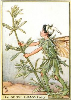 """""""The Goose Grass Fairy"""" by Cicely Mary Barker"""