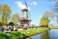 Keukenhof garden - Holland www.aruralchiclifestyle.com Amsterdam Travel, Holland, Trips, Garden, The Nederlands, Viajes, Garten, Lawn And Garden, The Netherlands
