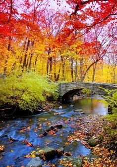 ✯ Rainbow Forest
