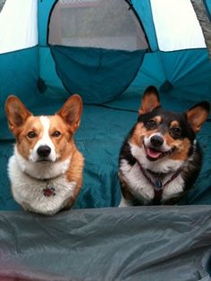 "One happy camper and one ""where-is-my-breakfast"" camper."