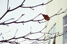 The last leaf. by ★ Chicz Chuot ★, via Flickr