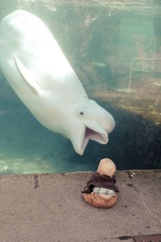 I love the happy face of the beluga and the position of the baby, eagerly leaning forward.  What an awesome pic.