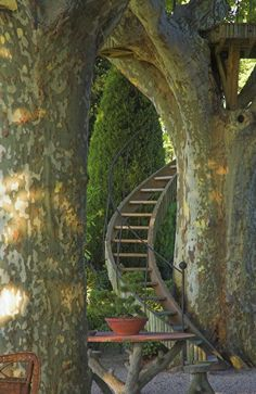 Stairway To The Trees in Provence, France: Dominique Lafourcade - garden designer - Mediterranean gardens in southern France