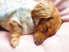 Tsubasa from Facebook having a nap!
