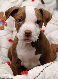 Lovin' this puppy!!!