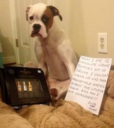 The best dog shaming ever!!