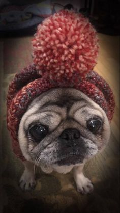 Handmade  Warm Dog Snood Hat Modeled by a Pug by TheKnittingGnomeVT on Etsy