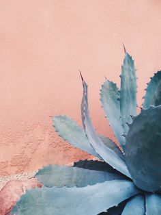 Rose Quartz background with Serenity blue agave cactus.
