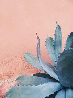 Rose Quartz background with Serenity blue agave cactus.