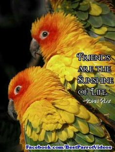 Conures: The sunshine of life