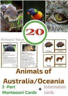 45 Animals of Australia and Oceania – 3 Part Montessori Nomenclature Cards and Information Cards Maria Montessori, Montessori Homeschool, Montessori Classroom, Montessori Toddler, Montessori Activities, Homeschooling, Geography Activities, Educational Activities For Kids, Animal Activities
