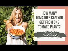 Garden Growing Marigolds, Arch Trellis, Planting Plan, Canning Tomatoes, Tomato Plants, Organic Herbs, How Many, Growing Tomatoes, Herb Garden