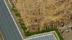 Big Bambu art installation by Doug Starn and Mike Starn on roof of Metropolitan…
