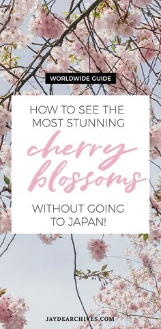 Worldwide Cherry Blossom Guide - How to see Cherry Blossoms without going to Japan