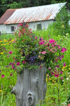 Tree Stump Planter:  If you've got an old tree stump in your backyard, rejoice—they make the most beautiful planters.