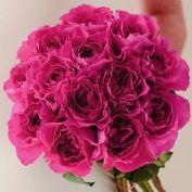 David Austin - Kate Classic Rose Bouquet