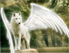 #Angels #angelhealing #angel www.thefaeriesandangelsmagazine.com/our-free-newsletter.php #wolves #whitewolf