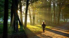 A futás stresszoldó és vértisztitó hatása