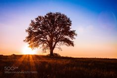 One tree by infofotodi. Please Like http://fb.me/go4photos and Follow @go4fotos Thank You. :-)