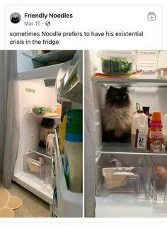 Animal Jokes, Funny Animal Memes, Cute Funny Animals, Funny Animal Pictures, Cat Memes, Funny Cute, Haha Funny, Cute Cats, Hilarious