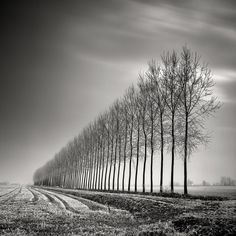 """"""" Specializing in long-exposure photography, Pierre Pellegrini's images are dreamlike, timeless, and expressive of noise-free environments. Best Landscape Photography, Tree Photography, Autumn Photography, Landscape Photos, Fine Art Photography, Exposure Photography, Picture Tree, Black And White Landscape, Black White"""
