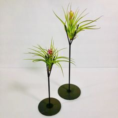 Blooming Air Plant – available online or in-store at Terrarium