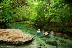 """""""Natural Lazy River"""" Rock Springs at Kelly Park in Apopka is Central Florida's natural lazy river. Rock Springs produces 26,000 gallons of crystal clear water every minute. Enjoy! Sharing is caring."""
