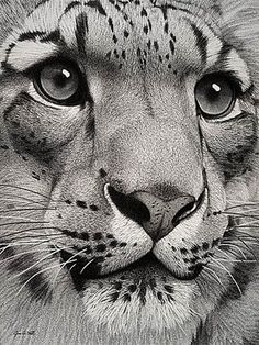 big cat art B&W phot
