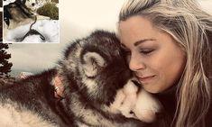 Dog owner takes dying Alaskan Malamute on four-hour trip to see snow Scottish Mountains, Alaskan Malamute, Favorite Pastime, Farm Hero Saga, Dog Owners, Husky, Snow, Dogs, Princess
