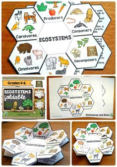 """Ecosystems-Interactive Science Notebook foldables This """"Ecosystems"""" foldable will help your students understand how energy flows in an ecosystem and how organisms interact within their ecosystems. Perfect for visual learners. This resource may be used wi 6th Grade Science, Middle School Science, Elementary Science, Science Classroom, Science Lessons, Teaching Science, Science Education, Science For Kids, Science Activities"""