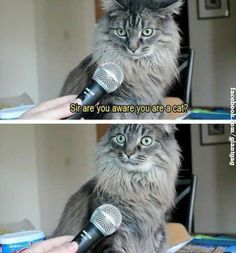Sir Are You Aware You Are A Cat ?,  Click the link to view today's funniest pictures!