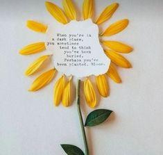 Flower Qoutes, Dark Places, Bloom, Plants, Instagram, Plant, Flower Quotes, Planets