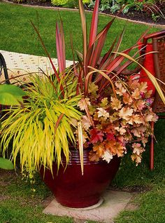 Part shade: Cordyline Pink Perfection, heuchera Autumn Leaves, gold Japanese hak grass