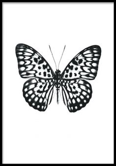 Poster med svartvit fjäril på vit bakgrund.