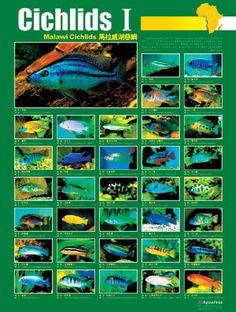 african cichlid species list pdf