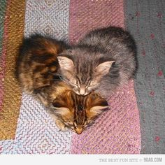 Stop the presses! It's kittens folks, in a shape of a heart.