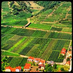#vineyards in the #wachau Austria, Wine Away, Viking River, Black Sea, Bike Trails, Wineries, Natural Wonders, Wine Country, Homeland