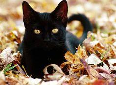 black cat - my obsession