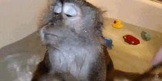 mono presumido