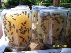 DIY - It's easier to let the bees put the honey in the jar for you. (And really fun to watch.)