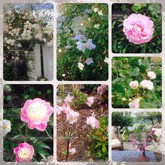 Det blomstrer i hagen